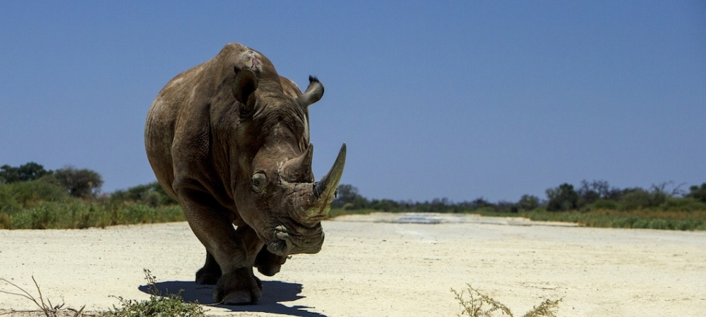 Hillaldam partners with Rhinos Without Borders